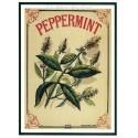 Carte Postale au format 15x21cm Peppermint